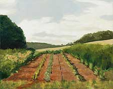 Planted field by Nancy Calicchio