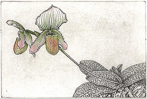 Etching of orchid by Bobbi Angell at BMAC